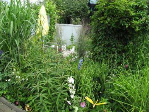 Grönska iträdgård